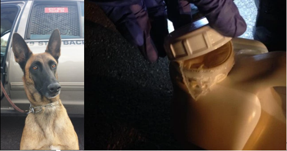 "K9 officer 'Emma' found the $2 million worth of crystal meth Ayala hid in ""Purple Power"" jugs.png"